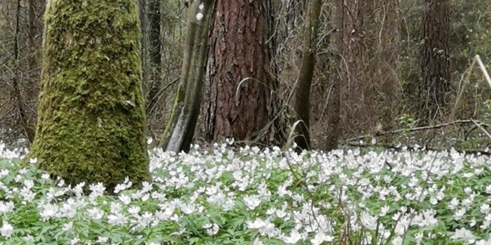 Wiosna w Enklawie Białowieskiej wygląda tak. Zapraszamy!